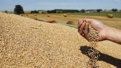 Photo of بنزرت تحتل المرتبة الثانية في إنتاج الحبوب على مستوى الوطن