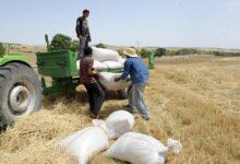 Photo of الاتحاد التونسي للفلاحة يدعو لفتح ملفات الفساد في منظومة الأعلاف